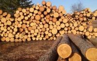 Украинский лес-кругляк запретили ввозить в Европу