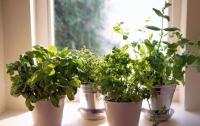 Названы самые полезные для здоровья человека комнатные растения