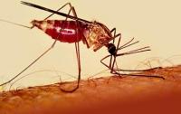 В Оксфорде изобрели новую вакцину против малярии