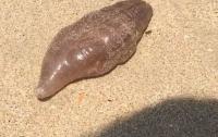 Странное существо вынесло из океана на пляж в Таиланде (видео)