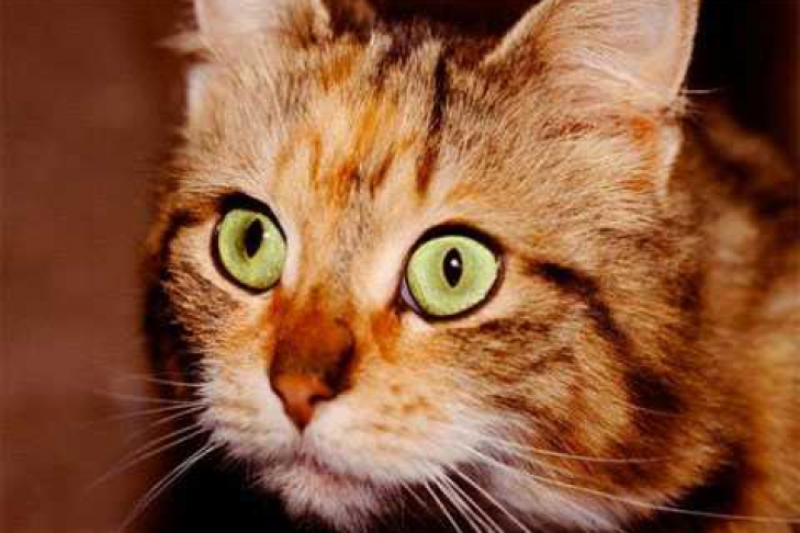 производят какие чувства есть у кошки ценными сотрудниками являются