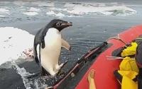 Неожиданный визит пингвина к австралийским ученым в Антарктике