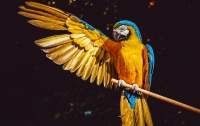 В Бразилии полиция арестовала попугая, который помогал наркоторговцам