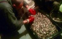 Под Киевом задержали браконьеров, наловивших рыбы на сумму более 100 тыс. грн