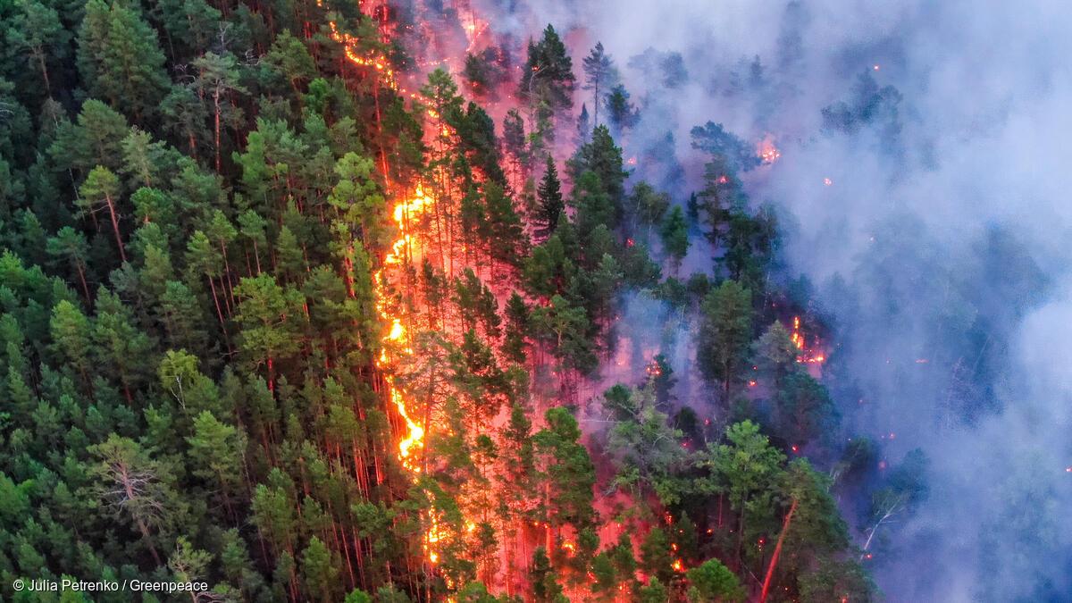 Показали, как огонь уничтожает природу РФ