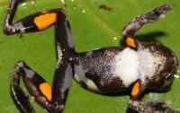 Лягушкам грозит массовое вымирание из-за