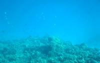 Половина кислорода, которым мы дышим, вырабатывает планктон