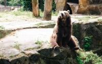 Медведь пять часов громил дом спящего американца