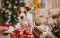 Приметы и суеверия на Новый год 2018