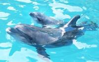 В Италии самка дельфина