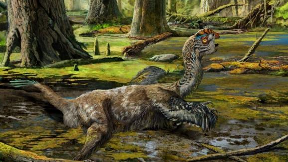 Китайцы нашли останки неизвестного пернатого динозавра