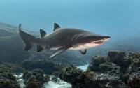 Гигантская акула атаковала женщину на глазах у дайверов