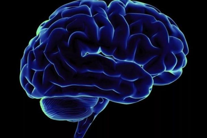 Человеческий мозг отказывается верить тому, что ему ненравится