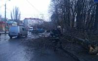Кто несет ответственность за упавшие деревья во время урагана