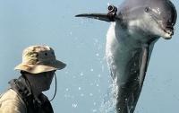 ВМС США отправит в отставку дельфинов-минеров в 2017 году