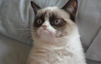 Сердитый кот признан «Интернет-мемом года»