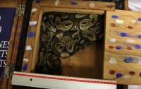 В багаже прилетевшего в Париж пассажира нашли живого питона