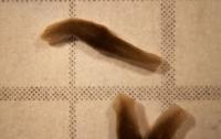 Ученые вырастили двухголовых червей (ВИДЕО)