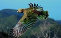 В Новой Зеландии попугай совершил грабеж