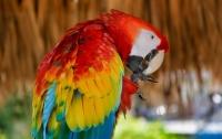 Полицейские задерживали наркодиллеров, а задержали попугая, который отказывается говорить
