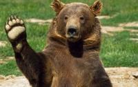 В России медведь вломился в торговый центр