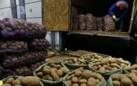 Цены на продукты: в Украине резко дорожает картофель
