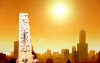 Лето 2016 года будет самым жарким в истории – учёные