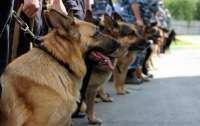 В Польше определять коронавирус начнут с помощью собак
