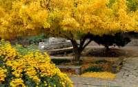 Разгадана тайна тысячелетнего дерева