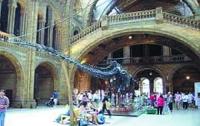 В Англии выставка живой природы проводилась на деньги горнодобывающего гиганта