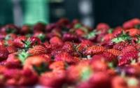 Ученые назвали самые опасные фрукты и овощи