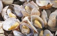 Браконьеры за ночь выловили 15 000 моллюсков в Одесской области