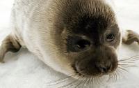 Детеныш тюленя заблудился в степи в Казахстане (видео)
