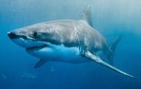 В Австралии акула напала на серфера