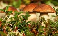На Харьковщине четверо туристов отравились грибами
