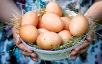 В Германию поставили более 28 млн зараженных яиц