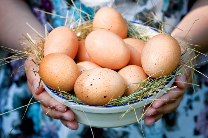 ВГерманию было поставлено неменее 28 млн яиц сфипронилом