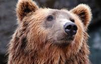 Мужчина выгуливал медведя на поводке (видео)