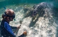 Туристы сняли на видео свое плавание с крокодилами