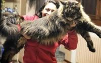 Самый длинный кот в мире стал звездой в сети