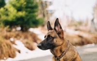 Под Днепром полицейский пес героически спас ребенка