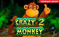 Обзор игрового слот автомата Crazy Monkey 2