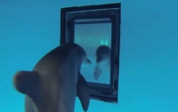 Дельфины узнают себя в зеркале раньше детей