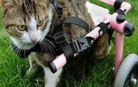 Котенку напечатали на 3D-принтере инвалидную коляску