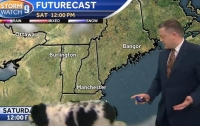 Любопытная собака стал героиней прогноза погоды (видео)