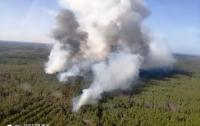 ГСЧС: в Житомирской области горят 15 га лесного массива