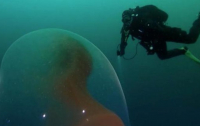 В океане нашли