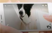 Появилось приложение, которое позволит животным