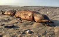 Загадочного монстра нашли на пляже в Техасе