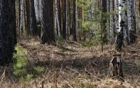 Под Житомиром в лесу нашли тело убитого мужчины